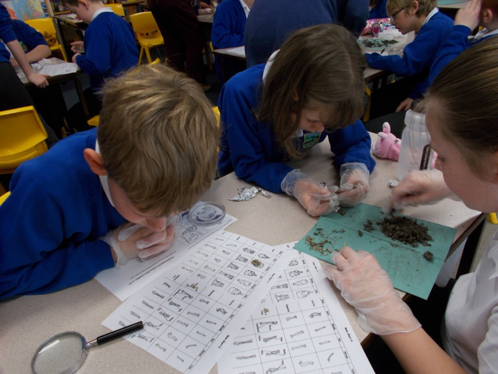 The children used the identification charts to find out what the owls had been eating