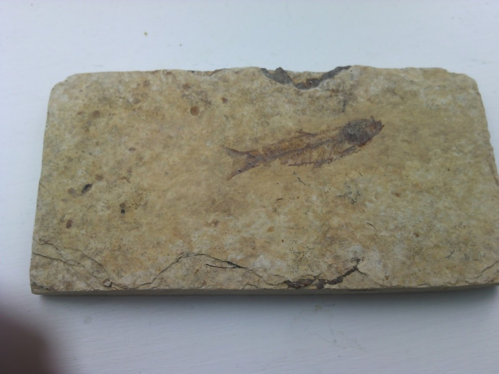 An aquatic fossil