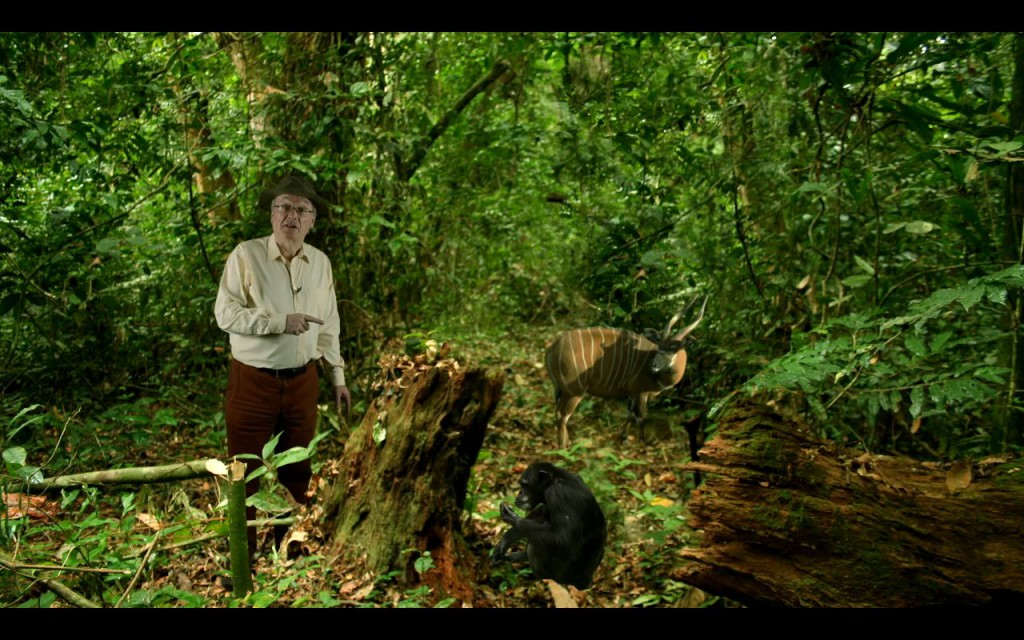 Visiting the African rainforest